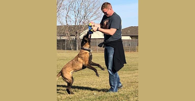 Photo of Nico, a Belgian Shepherd  in Manhattan, Kansas, USA