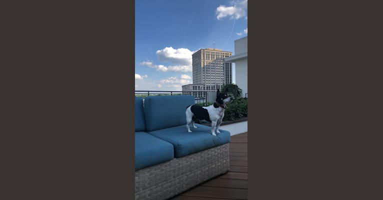 Photo of Sweet Pea, a Teddy Roosevelt Terrier  in Atlanta, Georgia, USA