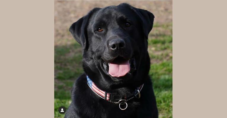 Photo of Judge, a Labrador Retriever  in Missouri, USA