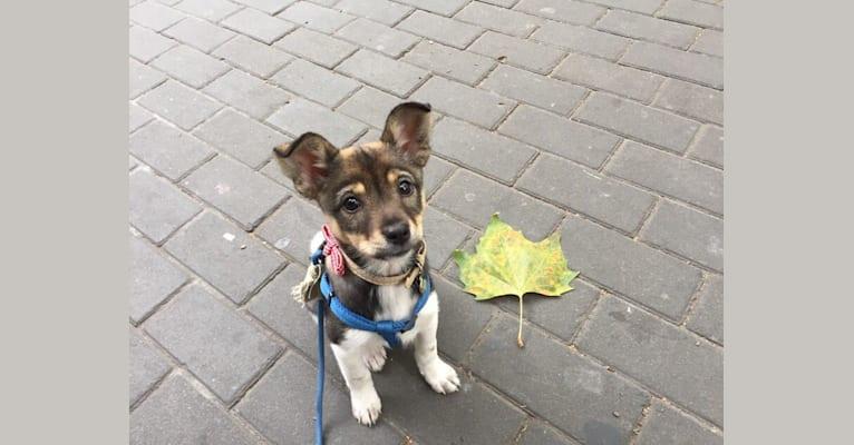 Photo of Lullaby, a Chinese Village Dog  in Nanjing, Jiangsu, China