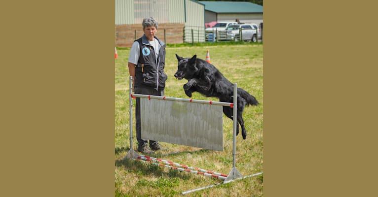 Photo of Knife, a Belgian Shepherd