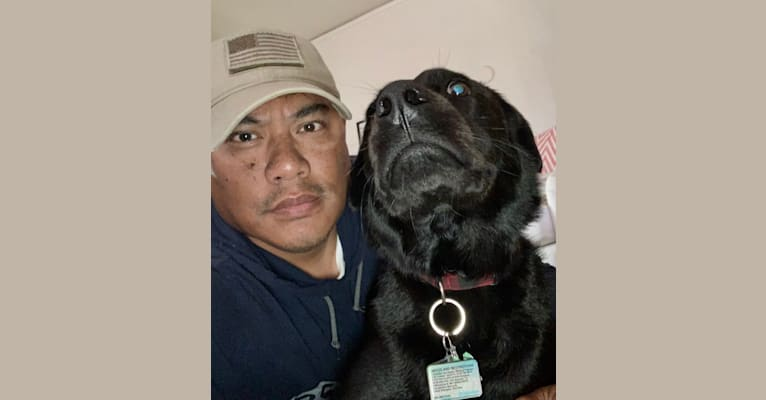 Photo of Tucker, a Labrador Retriever, American Pit Bull Terrier, and Rottweiler mix in San Antonio, Texas, USA