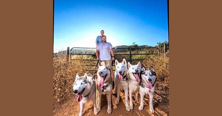 Photo of Argo, a Siberian Husky mix in Fallbrook, California, USA