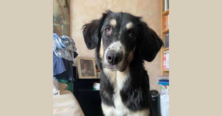 Photo of Pooka, an European Village Dog and Caucasian Ovcharka mix in Biancavilla, Sicilia, Italia