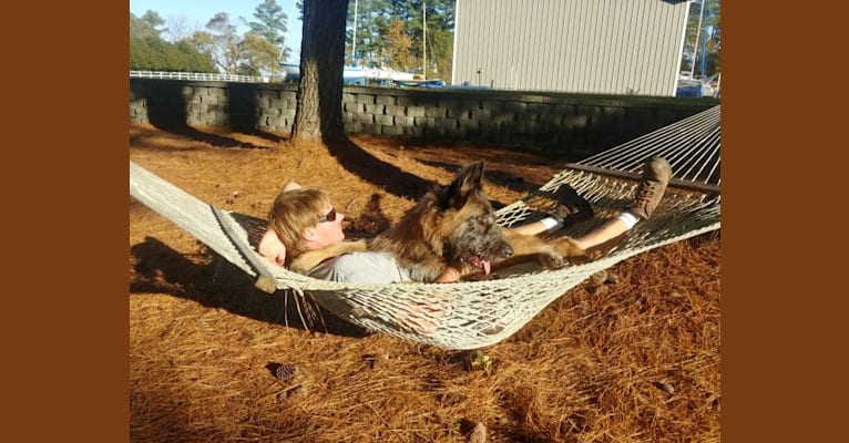 Photo of Sasquatch, an Akita, Irish Wolfhound, and Chow Chow mix in Virginia, USA