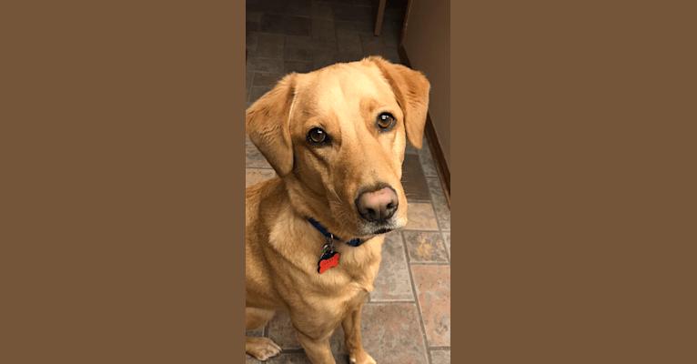 Photo of Cooper, a German Shepherd Dog, Rottweiler, and Siberian Husky mix in Brecksville, Ohio, USA