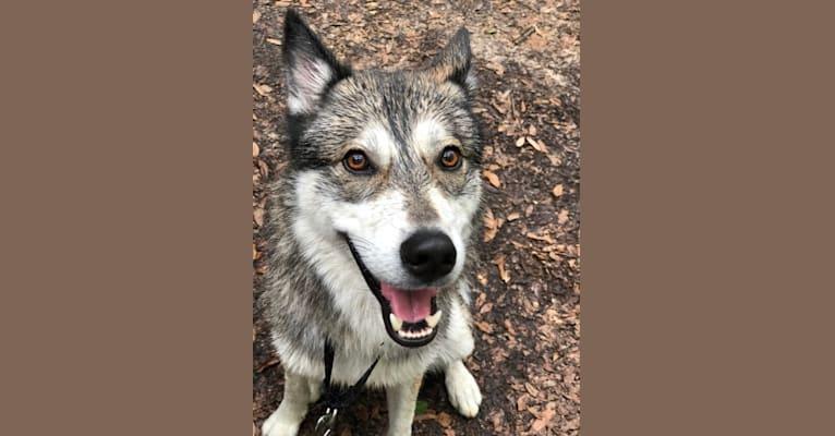 Photo of Lobo, a