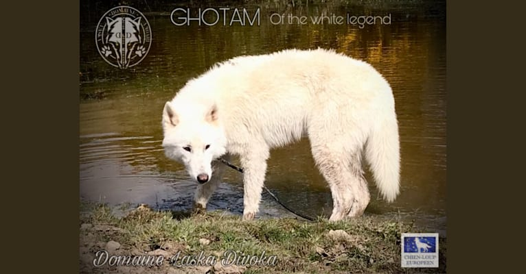 Photo of Gotham of the white legend, a   in Angers, France