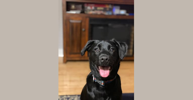 Photo of Brambles DePue, an American Pit Bull Terrier, Labrador Retriever, Siberian Husky, Rottweiler, and Mixed mix in Georgia, USA
