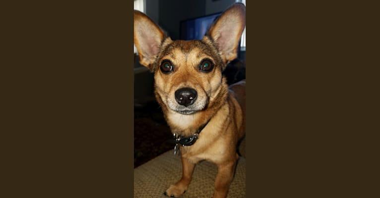 Photo of Cooper, a Chihuahua, Pomeranian, and Mixed mix in Thomaston, GA, USA