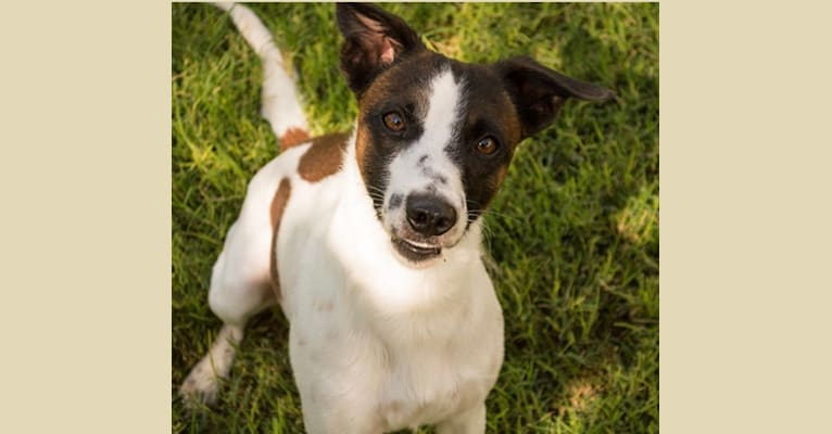 Photo of Gumption, a Whippet, Border Collie, and Border Terrier mix in Pahrump, NV, USA