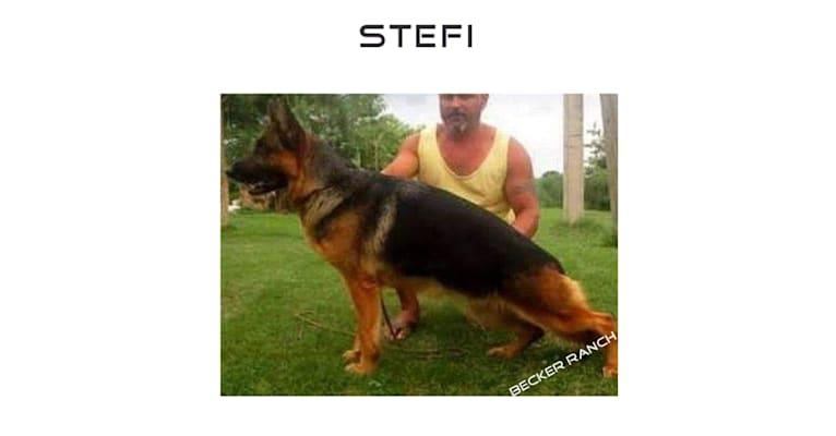 Photo of Stefi, a German Shepherd Dog  in Germany