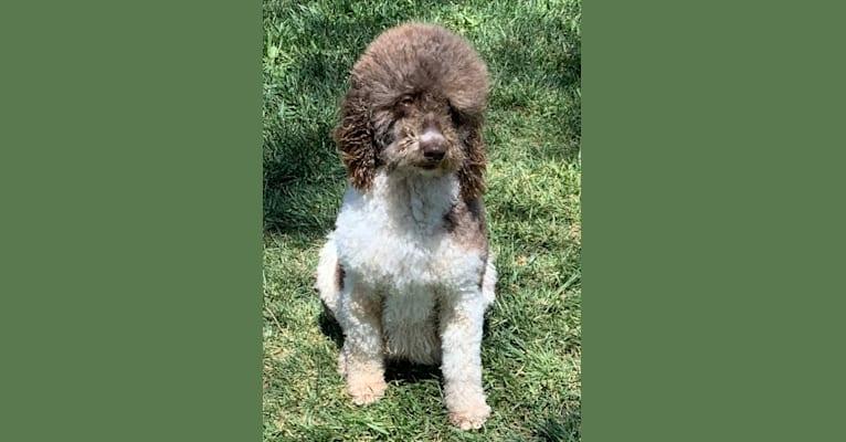 Photo of Tillie,