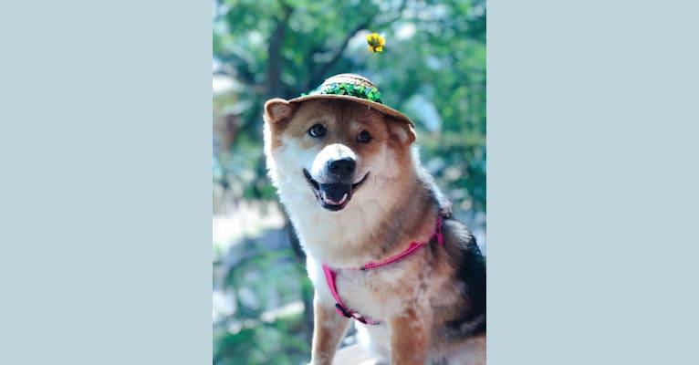 Photo of FAFA, a Vietnamese Village Dog  in China