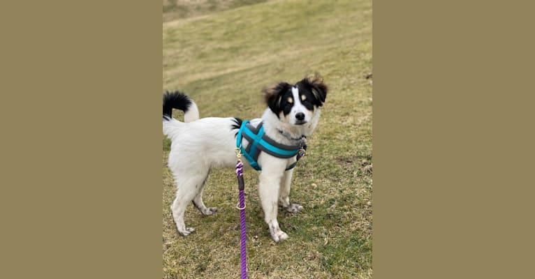 Photo of Vinnie, an Eastern European Village Dog  in Romania