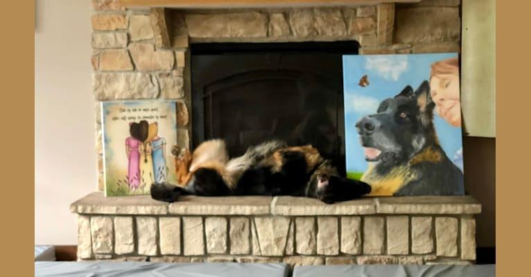 Photo of Greta, a German Shepherd Dog  in Valparaiso, Indiana, USA