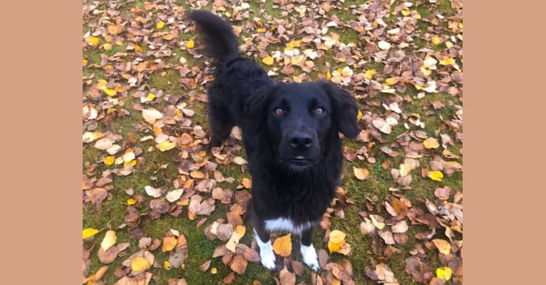 Photo of Aloe Vera, a Rottweiler, Border Collie, German Shepherd Dog, and Golden Retriever mix in Hinton and District SPCA Animal Care Centre, Kelley Road, Hinton, AB, Canada