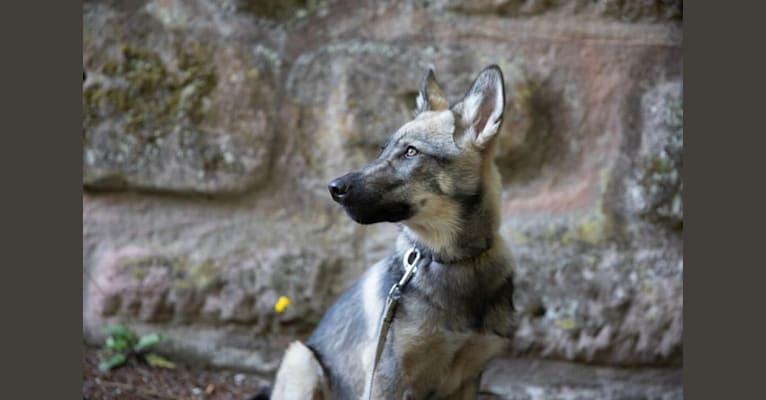 Photo of Torri, a   in Deutschland