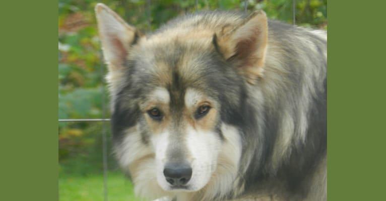 Photo of Zorro, a