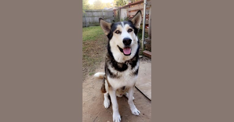 Photo of Sampson, a   in Murchison, TX, USA