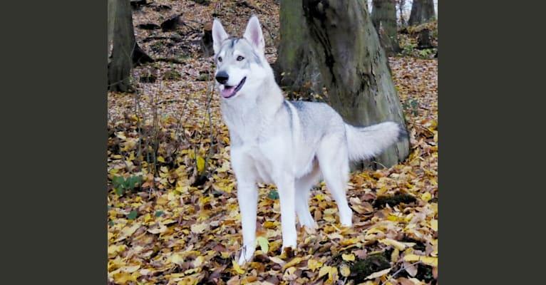 Photo of Dakota, a   in Schwalmstadt, Hessen, Deutschland