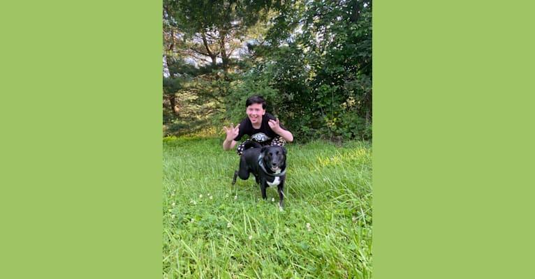 Photo of Bentley, an Australian Shepherd, Siberian Husky, Rat Terrier, Australian Cattle Dog, and Mixed mix in Charles Town, West Virginia, USA