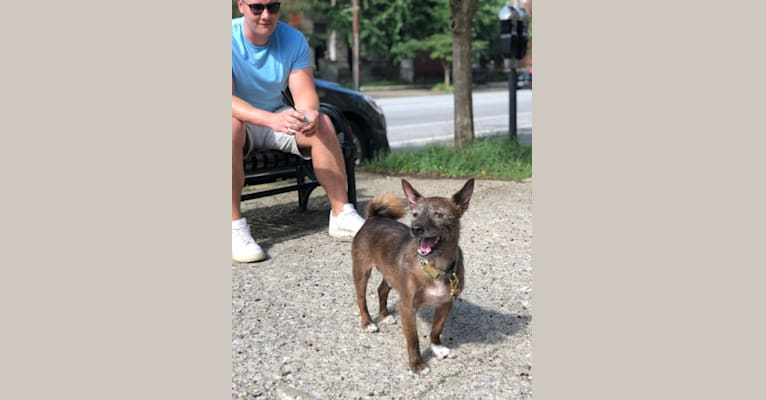 Photo of Theodore, a Basenji and Yorkshire Terrier mix in Albany, New York, USA