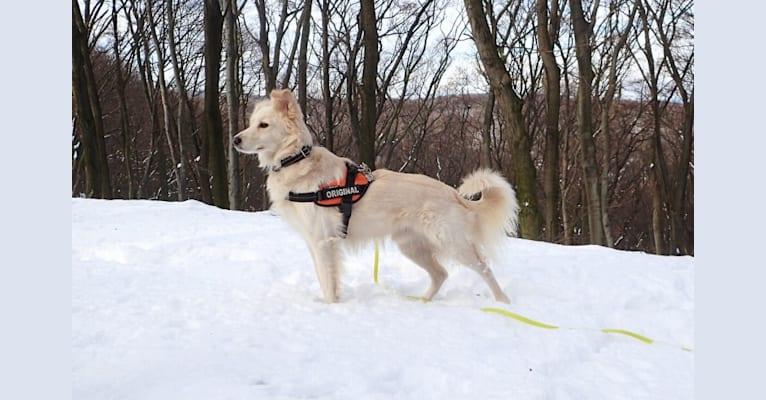 Photo of Max, an Eastern European Village Dog  in Bratislava, Bratislavský kraj, Slovensko