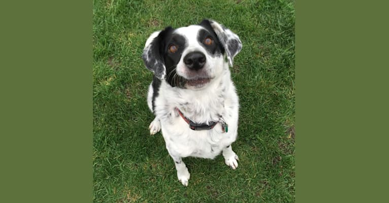 Photo of Lola, a Border Collie and American English Coonhound mix in Victoria, British Columbia, Canada