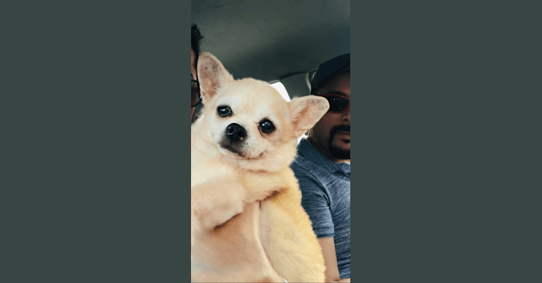 Photo of Brooklyn González, a Chihuahua  in Puerto Rico