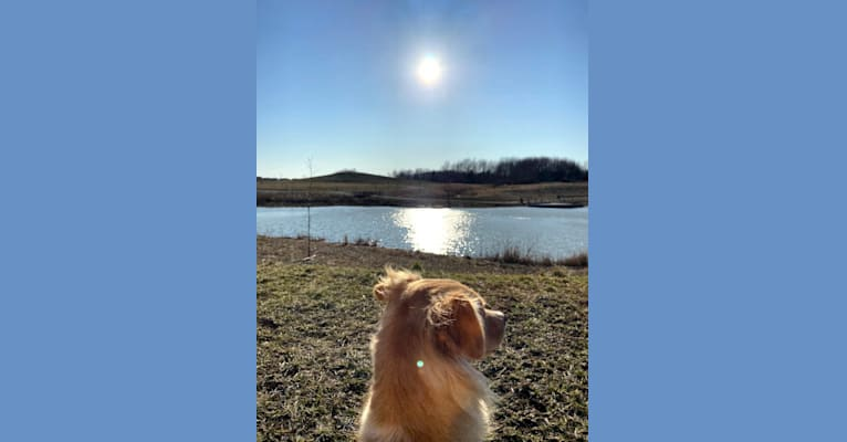 Photo of io, a Border Collie, Poodle (Small), Chinese Shar-Pei, and Mixed mix in Fort Thomas, Kentucky, USA