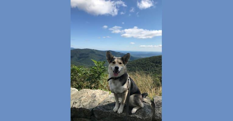 Photo of Jude, a Siberian Husky mix in Charlotte, North Carolina, USA
