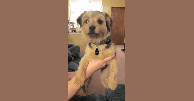 Photo of Bentley, a Yorkshire Terrier, Russell-type Terrier, Pug, Pomeranian, and Mixed mix