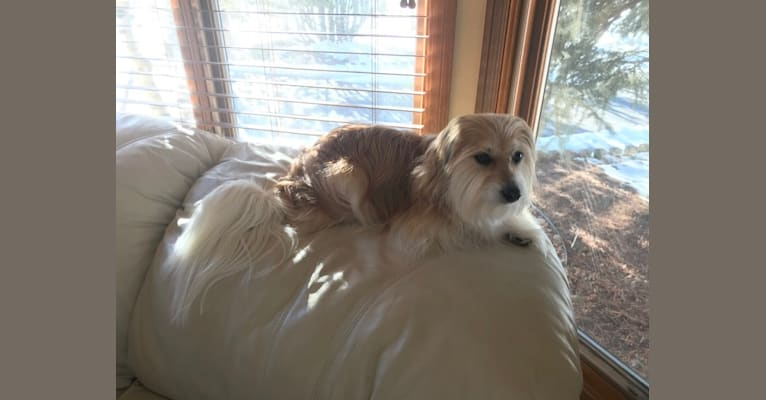 Photo of Winham's Cowboy Cody of Cowgirl Cotons, a Coton de Tulear  in New Mexico, USA