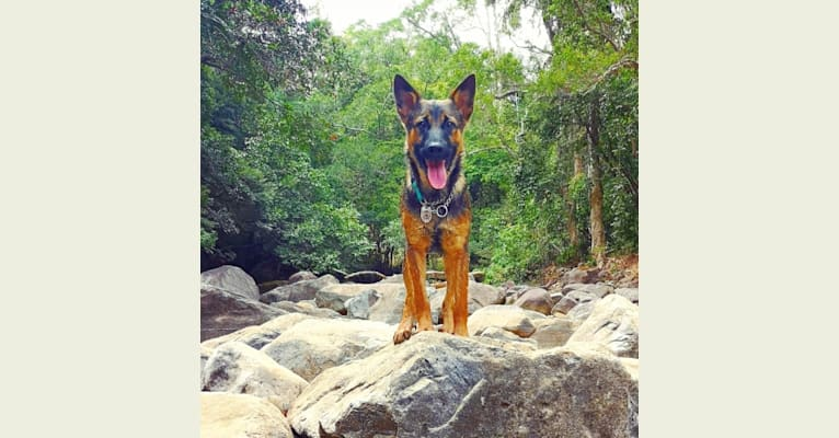 Photo of Eaton Chung, a Hong Kong Village Dog  in Hong Kong