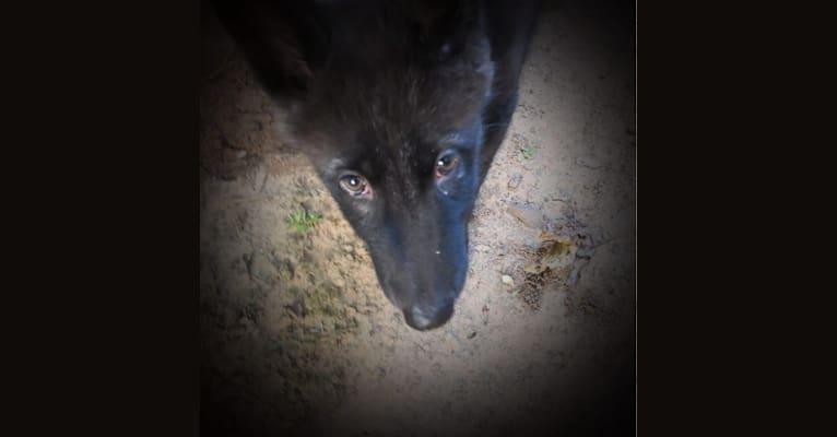 Photo of Loki, a
