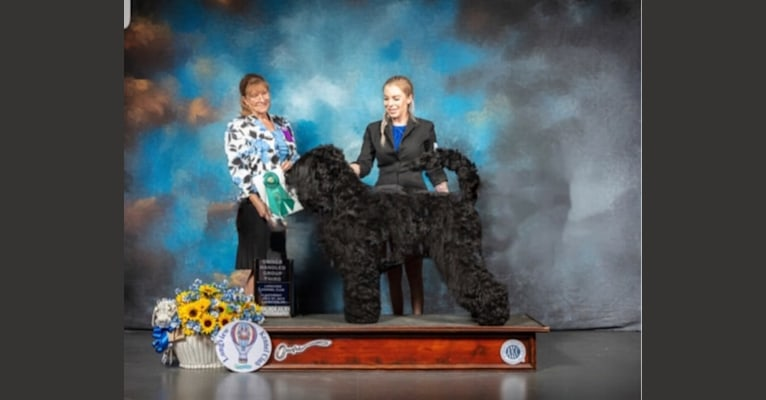 Photo of Herodes Fyodor Bella Fantasia, a Black Russian Terrier  in Slovenia