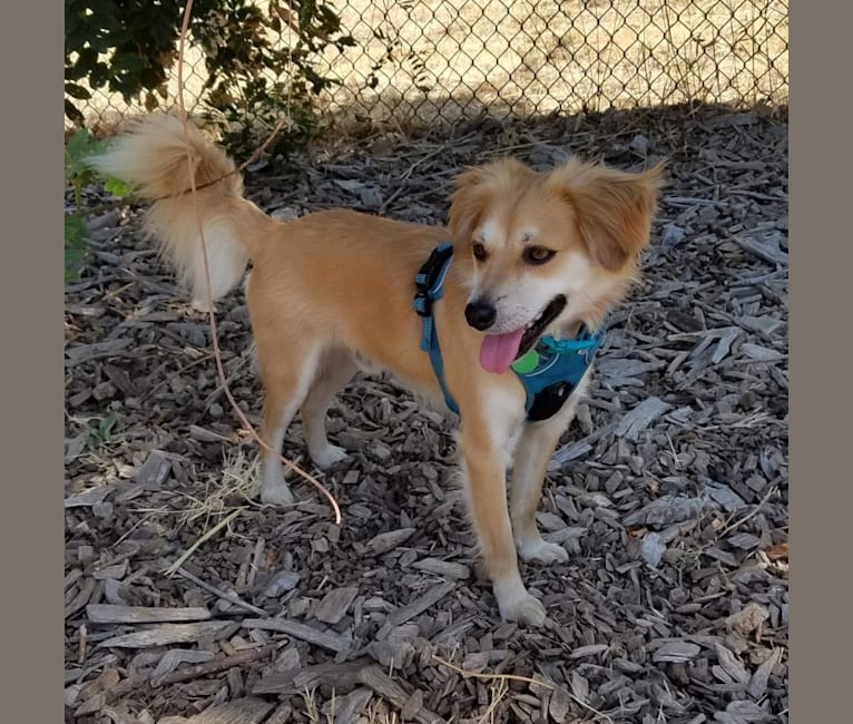Photo of Dougie, a Chihuahua, Dachshund, and Pug mix in Pacifica, California, USA
