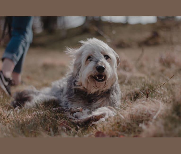 Photo of Olga, an Eastern European Village Dog  in Ryssland