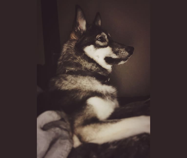 Photo of Fenrir, a   in New Mexico, USA
