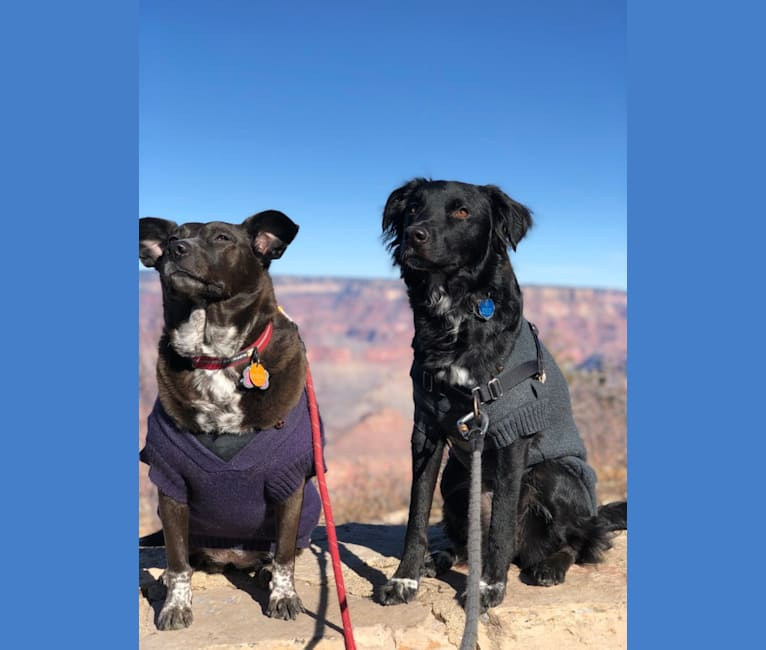 Photo of Somi, an Australian Cattle Dog and American Pit Bull Terrier mix in Utah, USA