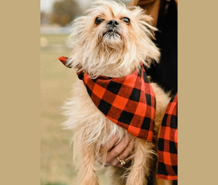 Photo of Zoee, a Shih Tzu, Miniature Pinscher, and Chihuahua mix in Fort Wayne, Indiana, USA