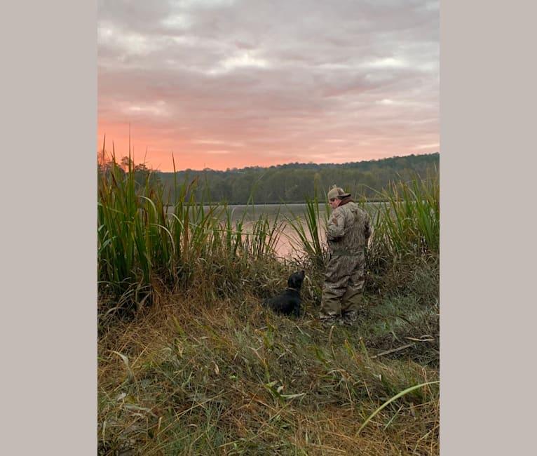 Photo of Drake, a Boykin Spaniel  in Doerun, Georgia, USA