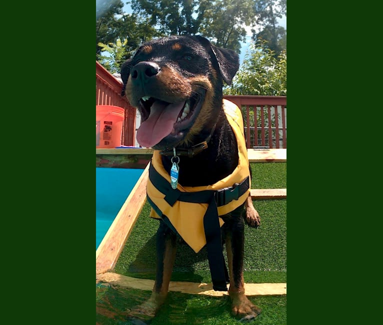 Photo of Baxter, a Rottweiler  in Indiana, USA