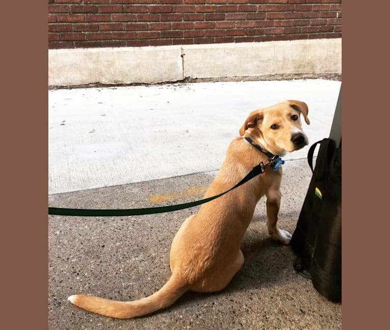 Photo of Emilio, a Dachshund, Rat Terrier, German Shepherd Dog, Labrador Retriever, Chihuahua, and Mixed mix in Southern Pines Animal Shelter, North 31st Avenue, Hattiesburg, MS, USA
