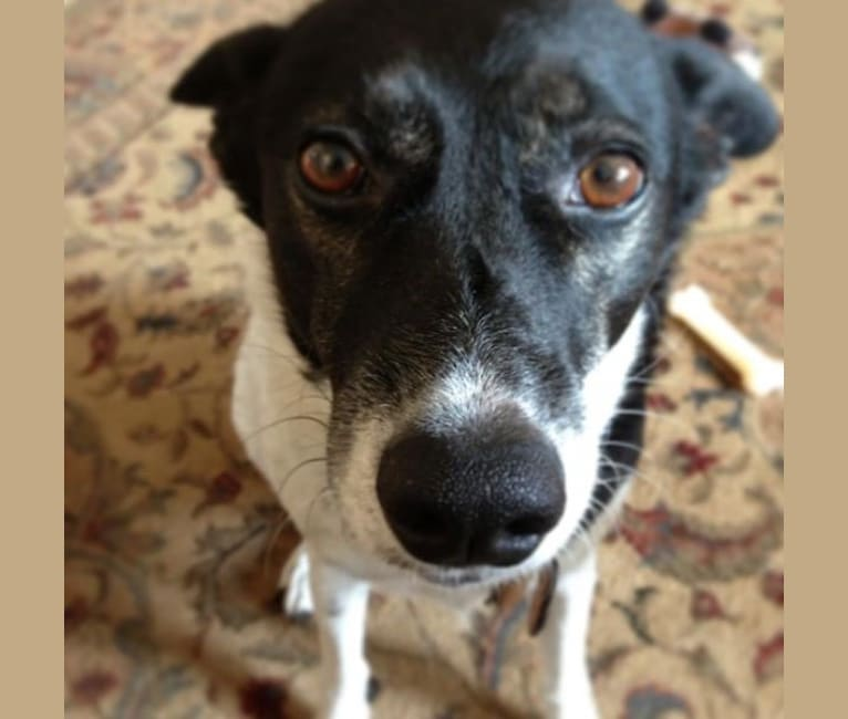 Photo of Lucy, a Formosan Mountain Dog  in Los Angeles, California, USA