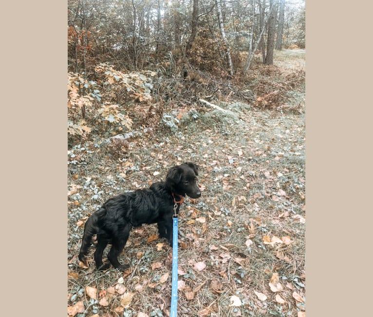 Photo of Max, a Chihuahua, Dachshund, Pomeranian, Chinese Shar-Pei, and Mixed mix in North Carolina, USA