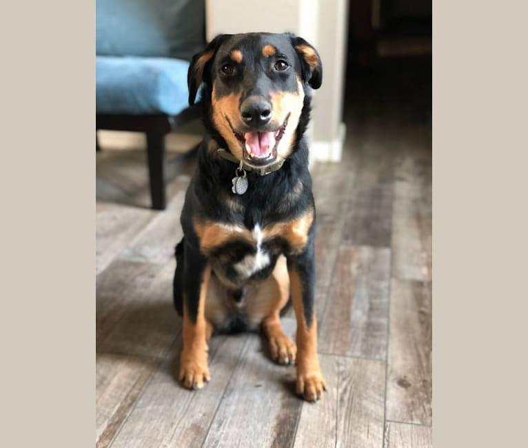 Photo of Jethro, an Australian Cattle Dog, Labrador Retriever, Boxer, German Shepherd Dog, Golden Retriever, and Mixed mix
