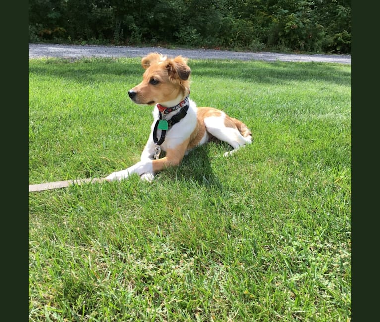 Photo of Leonardo, a Rat Terrier, Chihuahua, American Pit Bull Terrier, Dachshund, and Mixed mix in Mississippi, USA
