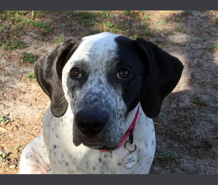 Photo of Lucy, an American Pit Bull Terrier and Bluetick Coonhound mix in Georgia, USA
